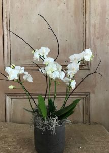 Wild Orchid in Pot